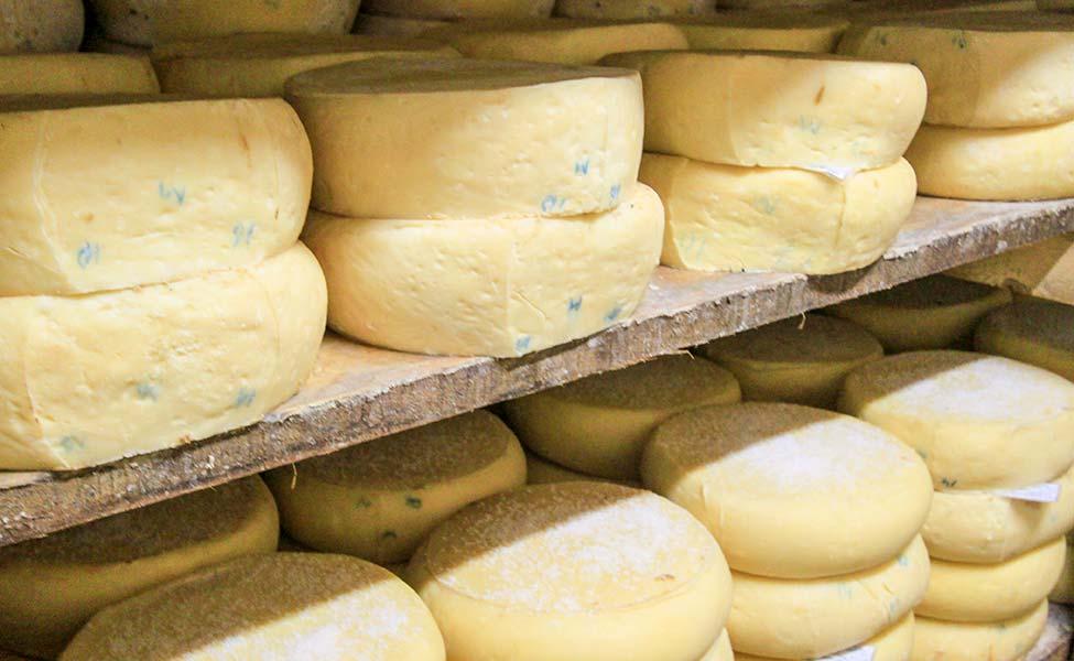 Poznati srpski specijalite kačkavalj sir