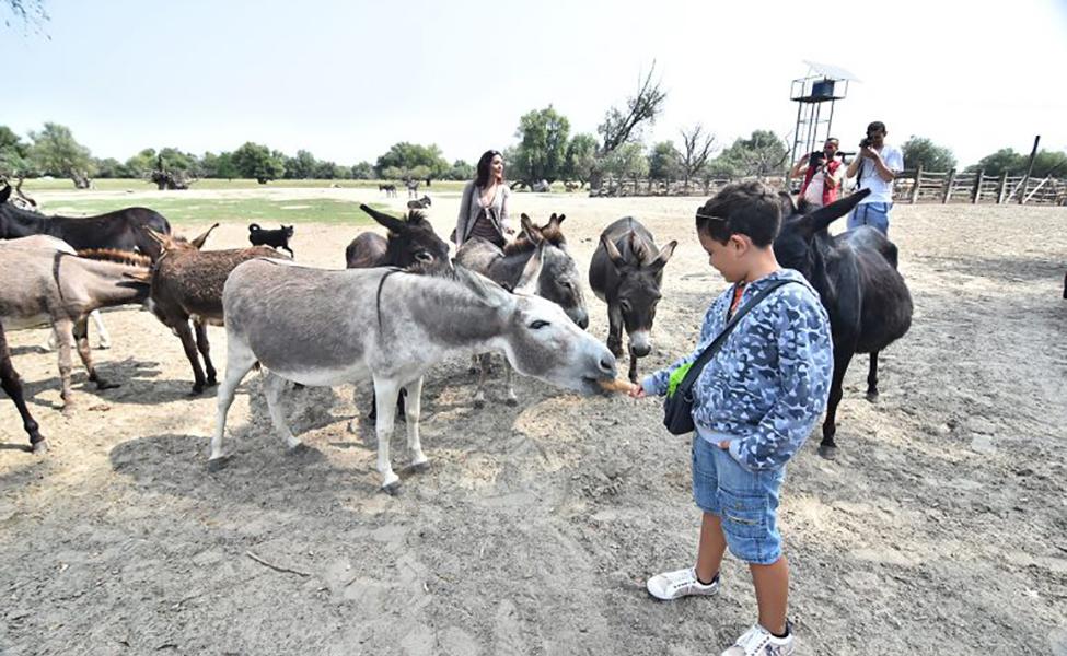 Dečja igra sa životinjama u Krčedinskoj adi