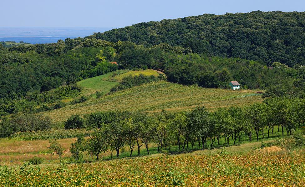 Fruška gora - livade i proplanci