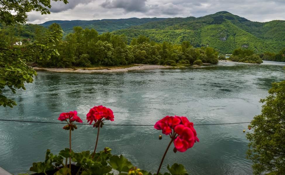 Jarkocrveno cveće pred bistrom vodom Drine