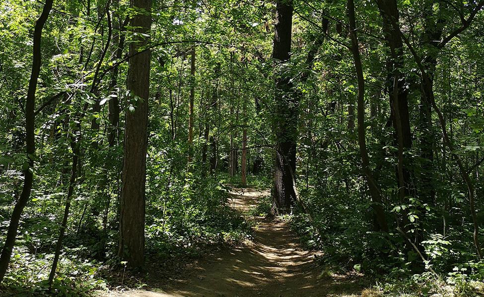 Zvezdarska šuma