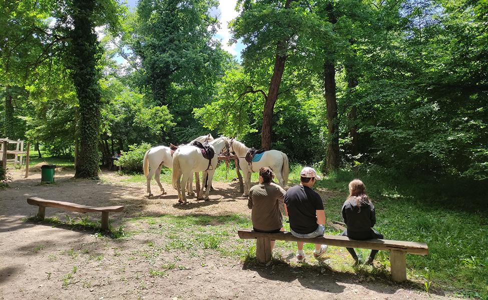 Konji za iznajmljivanje u Bojčinskoj šumi