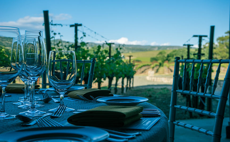 Vinogradi i vino, degustacija vina