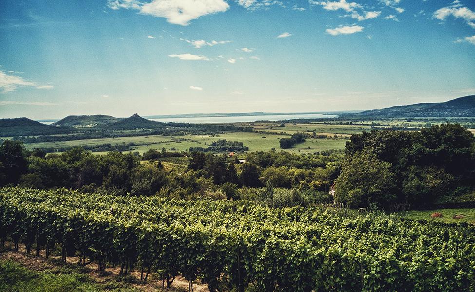 vinogradi i zelena prostranstva