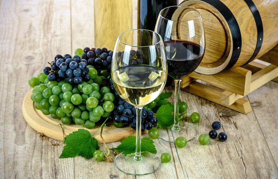 Vino, grožđe i vinova loza
