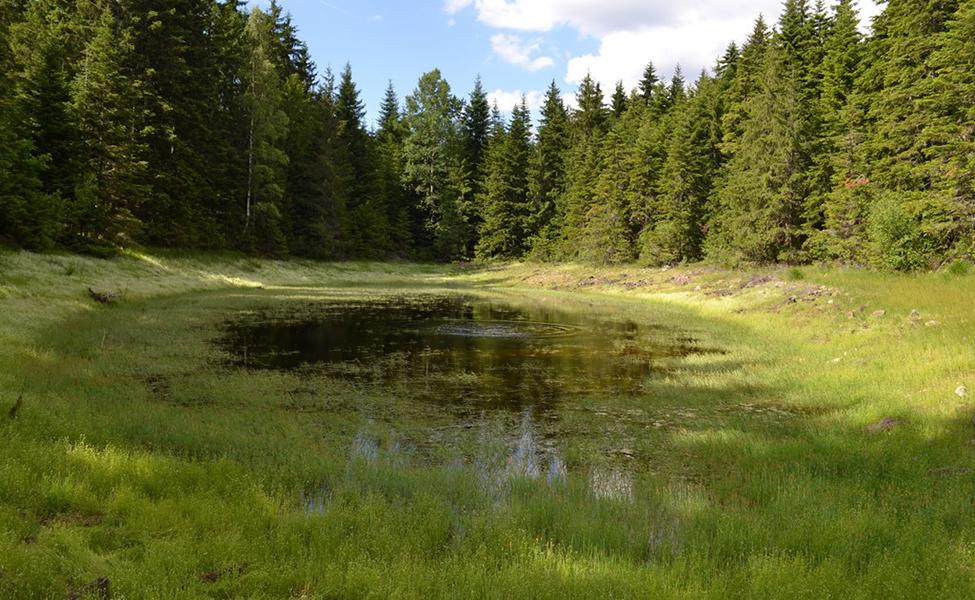 Jezero na planini okruženo drvećem