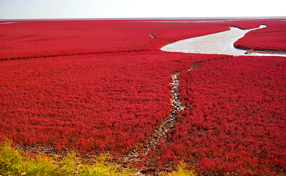 Red beach in China