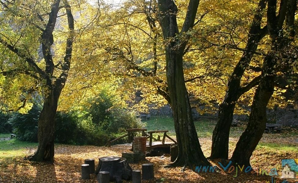 Priroda i park u Sremskim Karlovcima