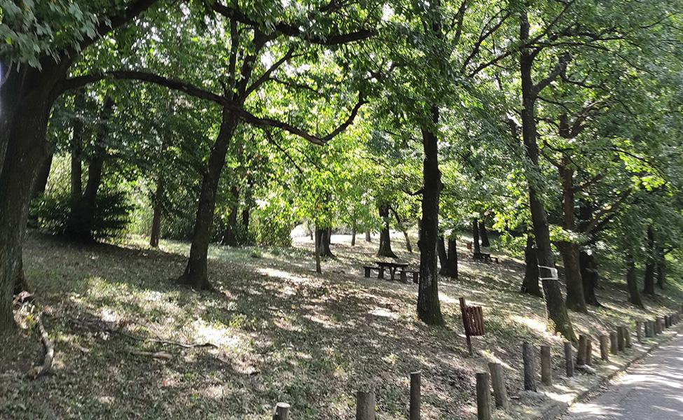 Priroda Kosmaja i šume na njemu