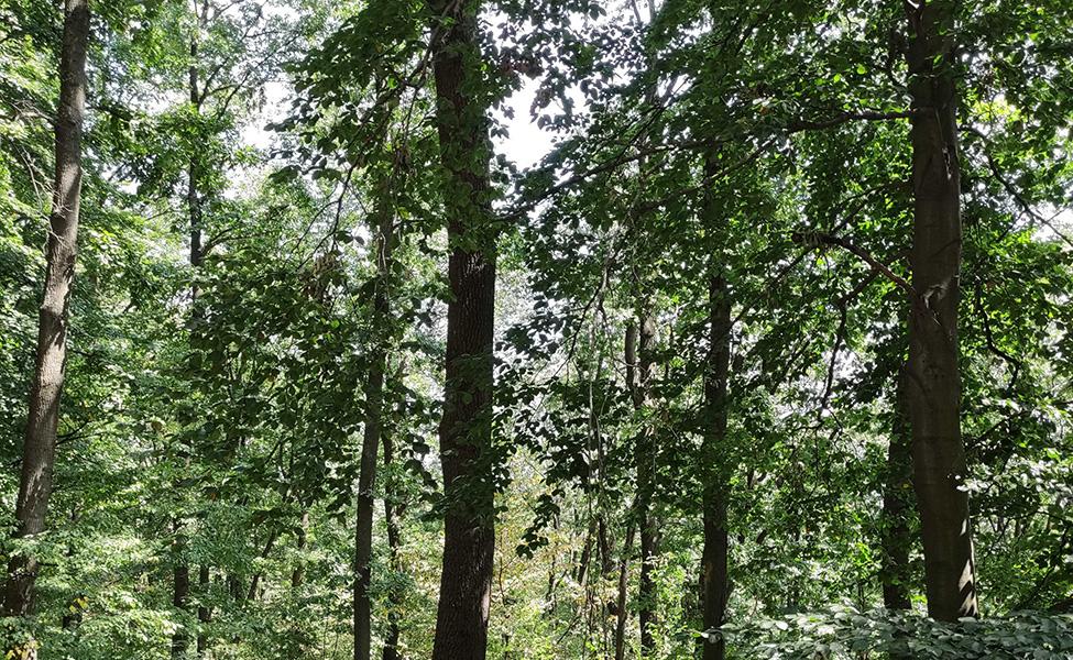 Šume na Kosmaju