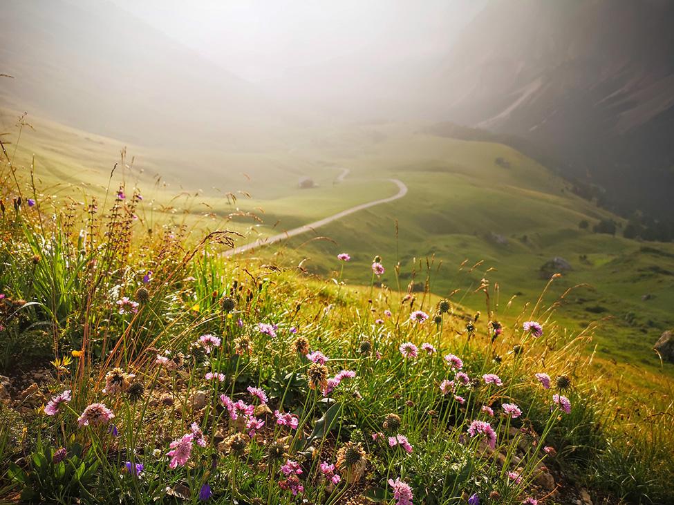 Raznobojno cveće na planini