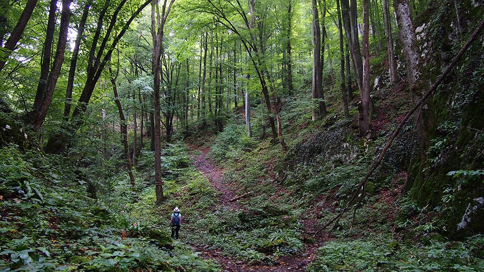 Homoljske planine pešačke ture