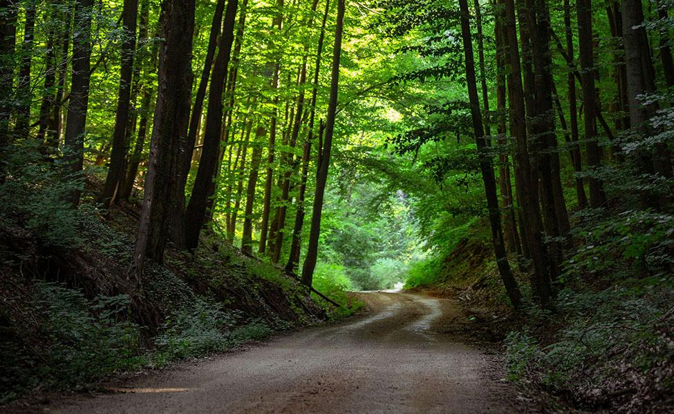 Homoljske šume i put koji vijuga kroz njih