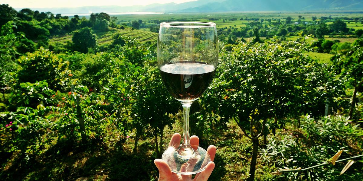 20 najlepših vinarija u Srbiji