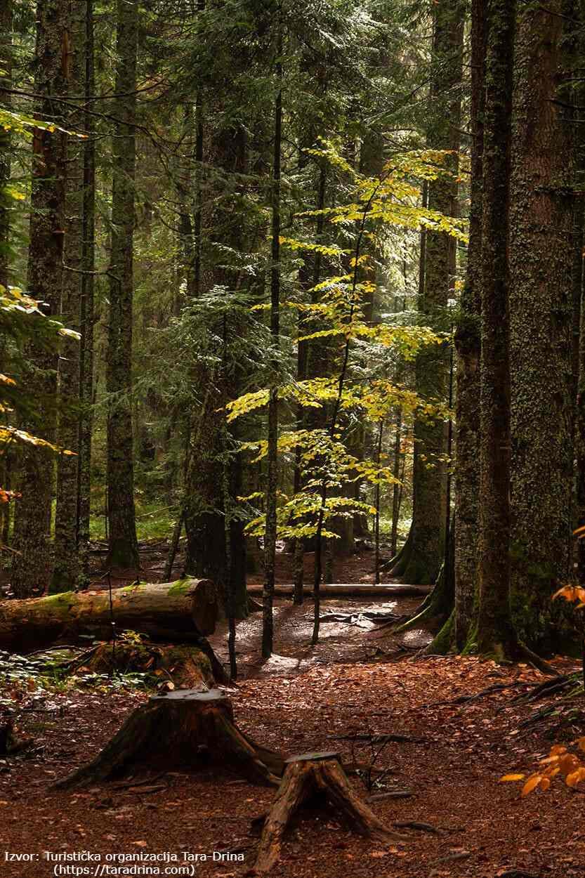 prirodni-rezervat-crveni-potok-6